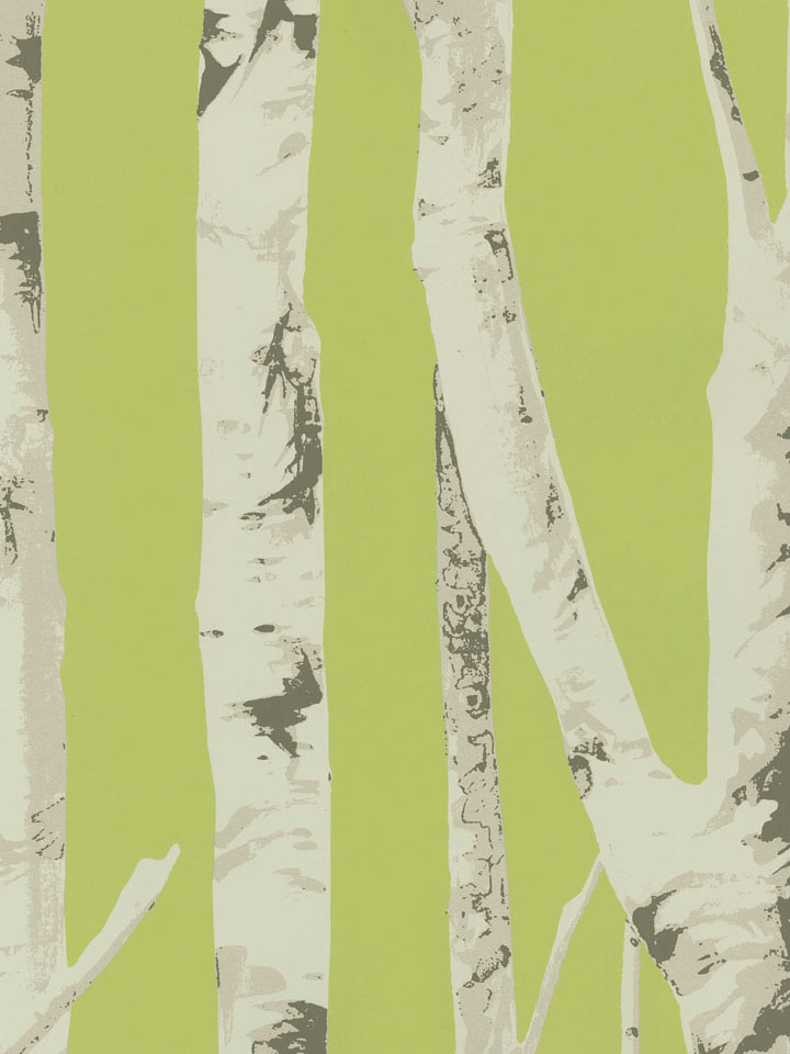 Birch tree wallcovering