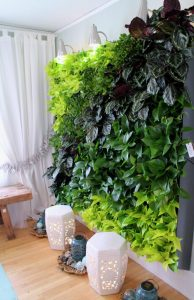 Bachman's Living Wall