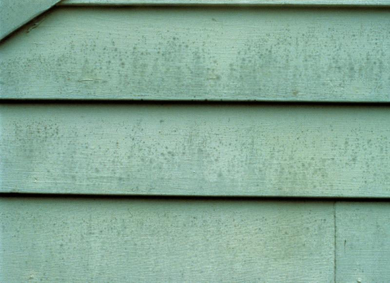 mildew paint issue