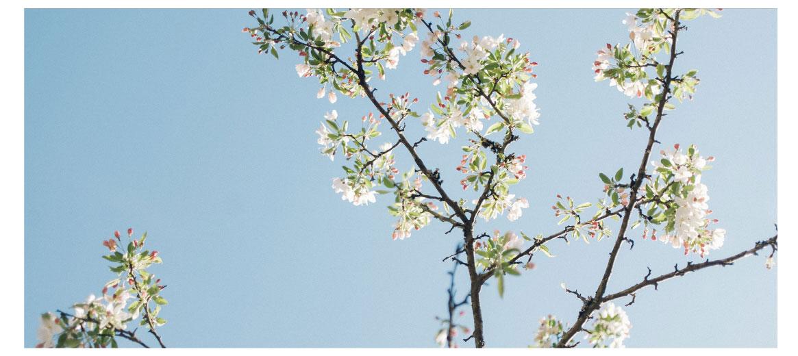 Hirshfield's Summer White Paint