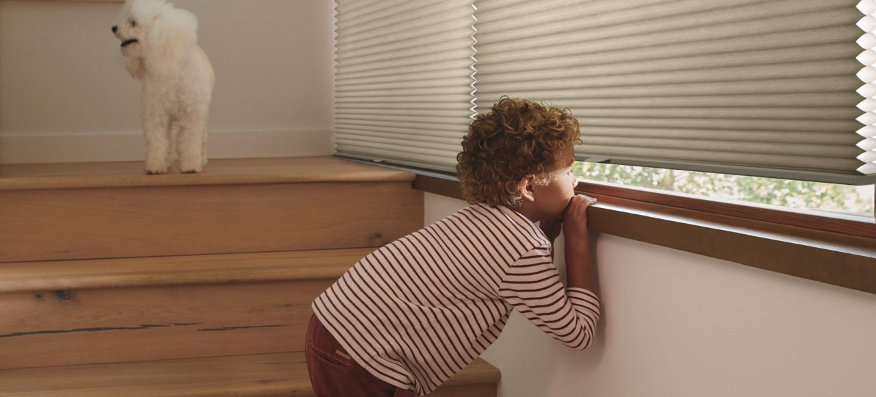 child pet safe hunter douglas