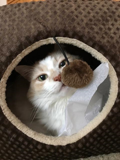 Hirshfield's Pets Amber