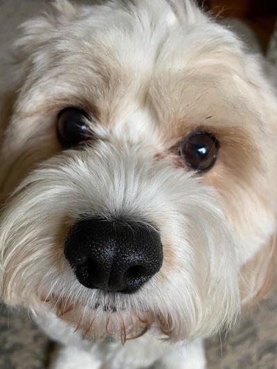 Hirshfield's Pets Breezy Belle
