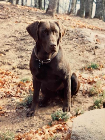 Hirshfield's Pets Brutus