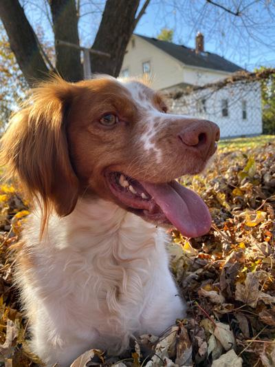 Hirshfield's Pets Copper