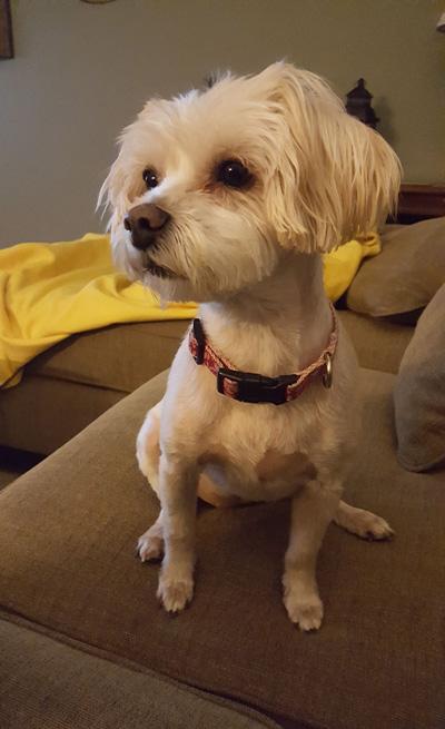 Hirshfield's Pets Daisy