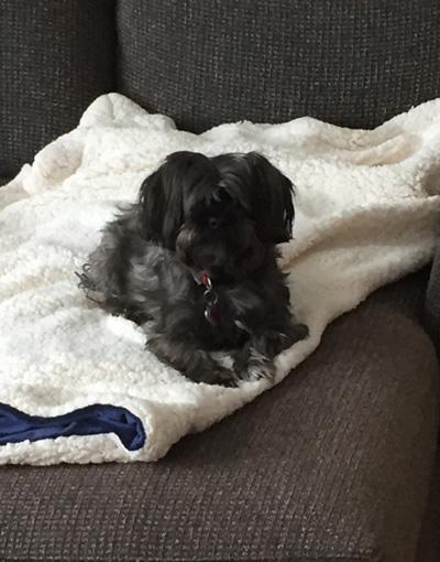 Hirshfield's Pets Duchess