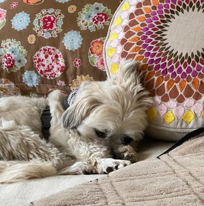 Hirshfield's Pets Finn (canine)