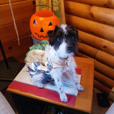 Hirshfield's Pets Lucy