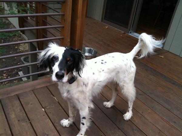 Hirshfield's Pets Maisy