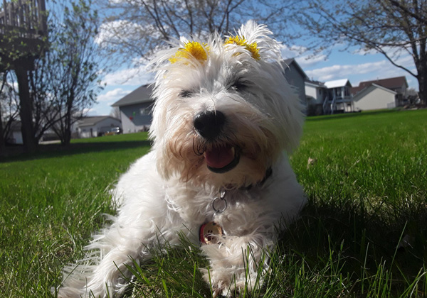 Hirshfield's Pets Mollie
