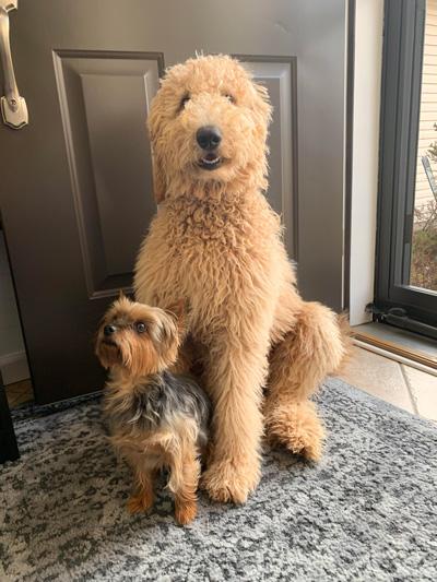 Hirshfield's Pets Oakley and Marley