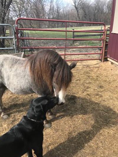 Hirshfield's Pets Ranger and Uno