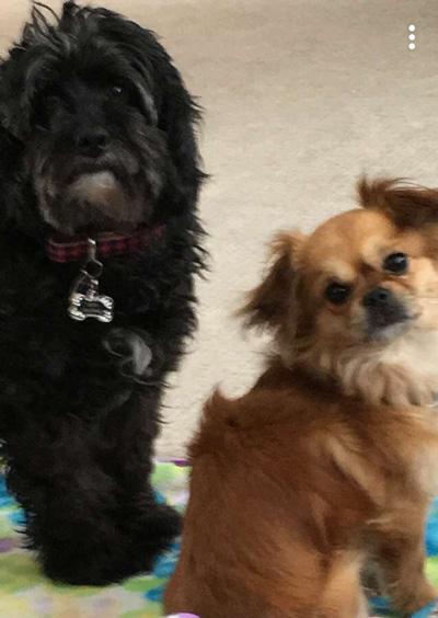 Hirshfield's Pets Rory and Mickey