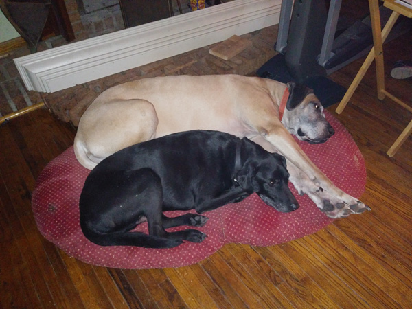 Hirshfield's Pets Sofia and Bub
