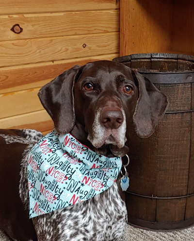 Hirshfield's Pets Sophie (bandana)