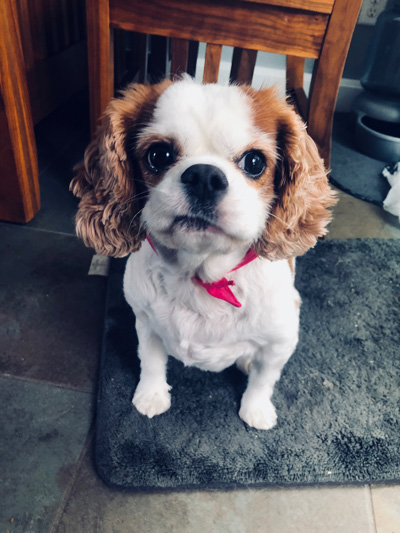 Hirshfield's Pets Sophie