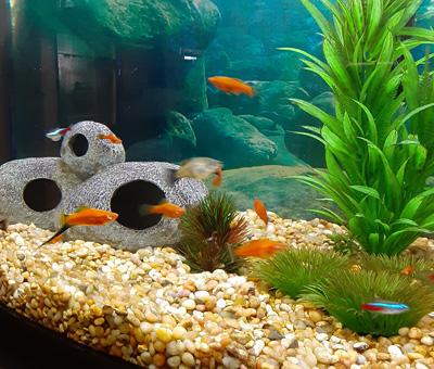 Hirshfield's Pets Fish